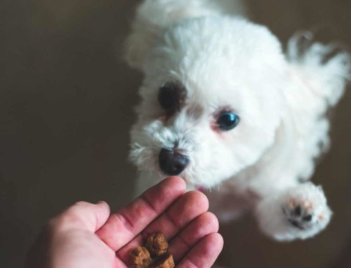 Find the Best Dog Food for Puppies for Your New Furry Friend