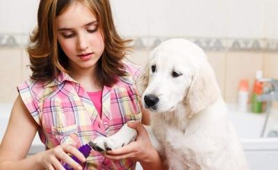 Best Dog Nail Grinders