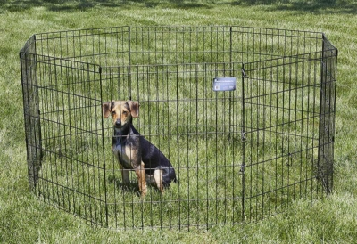 Dog-Fence-for-Large-Dogs