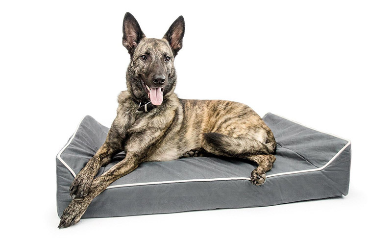 Titan Dog Bed