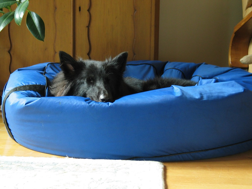 Best Donut Dog Bed for Your Pet